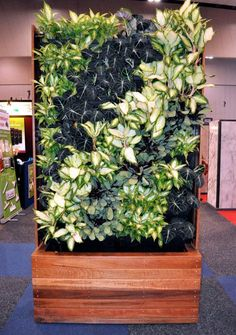 Vertical Gardens Melbourne | Decorative Outdoor Screens