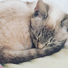 #cat#cats#kitties#catsofinstagram#aww #petsofinstagram#photooftheday#animal #cute#cutecats#adorable#meow Kitty, Cats, Instagram, Animals, Little Kitty, Kitten, Gatos, Kitty Cats, Cat