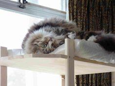 山田悠介オフィシャルブログ「釣り好きで猫好きの山田。」Powered by Ameba