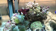 about an Aqua One Aquastart 340 reef aquarium