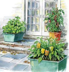 42f a06ebd24adaf1940f9179a garden post ve able garden