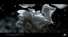 Kris MV screenshot