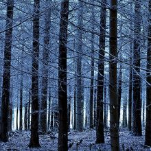 Canvasprint - Blue Forest