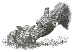 Cow+Clip+Art | Cow and Calf - A mother cow is lickingher calf.