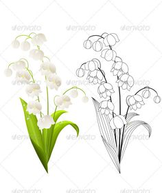 Vector Lily of the Valley Isolated on White. Vector lily of the valley isolated. Contour and coloured version. Nail Art Fleur, Tattoo Fleur, Birth Flower Tattoos, Tattoo Flowers, Lilies Tattoo, Natur Tattoos, Lily Of The Valley Flowers, Flower Sketches, Birth Flowers