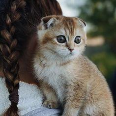 Знакомьтесь, новый член нашей семьи - Бунька ❤️ Котёнка назвала Элина и мы решили так и оставить))) пока она ещё в шоке от всего, особенно от Джекки, но я надеюсь, что они скоро подружатся. #нашабунька