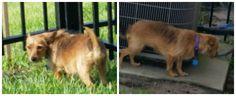 Lost Dog - Yorkshire Terrier Yorkie - Jacksonville, FL, United States 32244