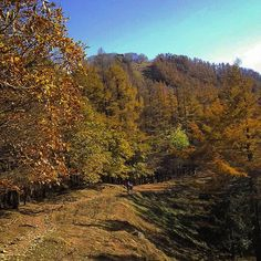 【ajico_fukamidori】さんのInstagramをピンしています。 《2016年11月4日 雲取山☀ 石尾根縦走路に到着 稜線を伝って奥多摩小屋へ⛺  #雲取山 #奥多摩 #七ツ石山 #縦走 #百名山#山 #山登り #登山 #トレッキング #ハイキング #写真好きな人と繋がりたい #森 #秋 #紅葉 #テント #mountain #mountaintrekking #japan #trekking #nature #outdoor #trip #autumn #hiking #naturephotography #forest #backpacking #tent #kumotoriyama》