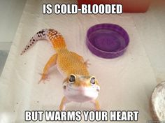Aww. Lava has this expression...