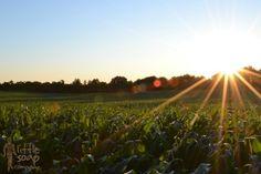 Blog post! What is Biodynamic Farming? http://www.littlesoapcompany.co.uk/what-is-biodynamic-farming/