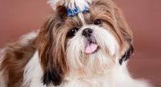 Resultado de imagen para los mejores tratamientos para el cabello de los perros