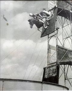 "A frontiersman and sharpshooter of the Wild West, William Frank ""Doc"" Carver, is generally credited with developing the diving horse routine, which came to Atlantic City in the Horse Diving, Horse Fly, Horse World, Atlantic City, Black And White Pictures, Wild Hearts, Beautiful Horses, Old Pictures, Wild West"