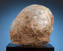 Prehistoric Fossilized Dinosaur Egg