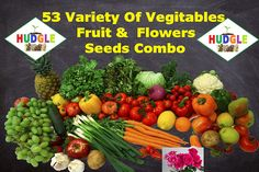 HUDGLE - Combo Pack Of 53 Vegetable Seeds For Terrace And Kitchen Gardening 300 Seeds Each : Spinach,Fenugreek,Mustard Leaves. 200 Seeds Each: Coriander,Baby Spinach, Red Spinach,Onion. 50 Seeds Each: Ooty Carrot, Red Carrot, Radish White,Turnip,Redish Red,Garlic Chives. 30 Seeds Each: Corn 20 Seeds Each: Tomato, Broccoli, Cabbage, Knol-Khol, Green Capsicum,…