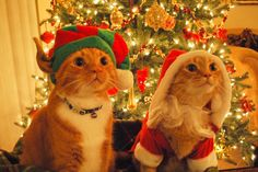 Janie, this needs to be on your Christmas card, plus one cat.
