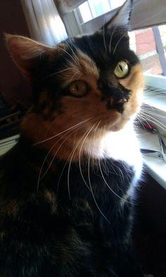 my kitty <3