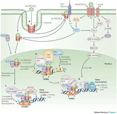 Vitamin D signalling pathways in cancer: potential for anticancer therapeutics