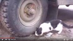Videos mais divertidos: Vídeos engraçados: Ratinho esperto fica camuflado ...