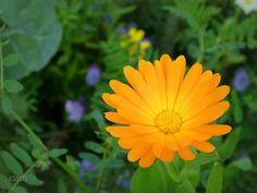 autumn orange special