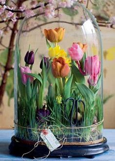 Tulips, my favourite!