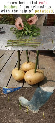The Best DIY Guide to A Great Garden  14
