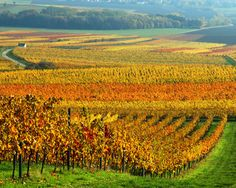 Germany.. I've been to some amazing vineyards in Austria and Germany. <3 I would love to go back