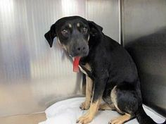 Scared and confused, Jo is out of time at high-kill upstate SC shelter