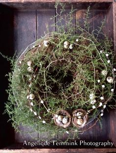 David Austin Rosen, Willow Weaving, Creation Deco, Decoration Inspiration, Grapevine Wreath, Terrarium, Grape Vines, Projects To Try, Creations