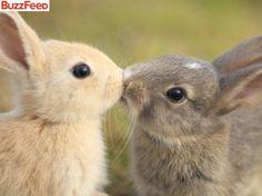 Os coelhos foram flagrados durante um beijo apaixonado no campo