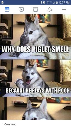 20 Funny Husky Jokes That Will Lighten Up Your Mood - Funny Husky Meme - Funny Husky Quote - The post 20 Funny Husky Jokes That Will Lighten Up Your Mood appeared first on Gag Dad. Husky Humor, Husky Jokes, Funny Husky Meme, Dog Jokes, Puns Jokes, Corny Jokes, Dog Quotes Funny, Animal Jokes, Funny Animal Memes