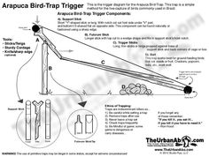 Arapuca Bird Trap Trigger Diagram