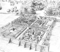 Walled garden - Drawing by Tom Struart-Smith