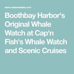 Boothbay Harbor's Original Whale Watch at Cap'n Fish's Whale Watch and Scenic Cruises