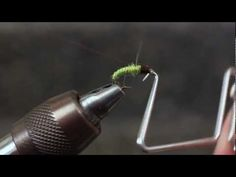 Tying a Green Caddis Larva Fly Fishing Life, Fly Fishing, Fly Rods, Nymphs, Freshwater Fish, Fly Tying, Trout, Evolution, Colorado