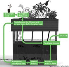 Intro to Aquaponics by Survival Life at http://survivallife.com/2015/06/25/intro-to-aquaponics/