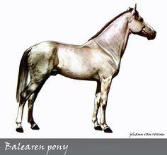 Balearen pony
