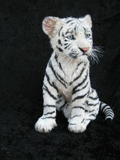 Pet a baby white tiger! Baby White Tiger, White Tiger Cubs, White Bengal Tiger, White Lions, Tiger Tiger, Animals And Pets, Baby Animals, Cute Animals, Wild Animals