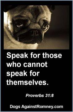 Speak for those who cannot speak for themselves #dogsagainstromney #mittromney