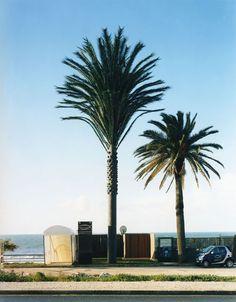 torre de telefonía celular disfrazado de árbol (7)
