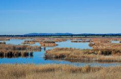https://flic.kr/p/rfbq9K   Las Tablas de Daimiel   Las Tablas de Daimiel es un paraje declarado Parque Natural en 1973 y Reserva de la Biosfera en 1981.  Situado a caballo entre los municipios de Daimiel y Villarrubia de los Ojos y con una superficie de 3 030 hectáreas, es el último representante de un ecosistema que fue característico de La Mancha hasta los años 60 y que es denominado como tablas fluviales. Estas tablas fluviales se forman con el desbordamiento de los ríos en en tramos de…