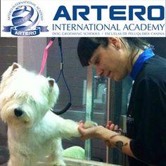 Prácticas en el curso de peluquería y estética canina y con todo el entusiasmo de los alumnos.  En la foto, alumna de Artero International Academy en plenas prácticas.  Infórmate de nuestros curso, clickando en esta imagen