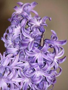 Jacint Botanical Art, Beautiful Flowers, Rose, Nature, Plants, Pink, Naturaleza, Plant, Roses