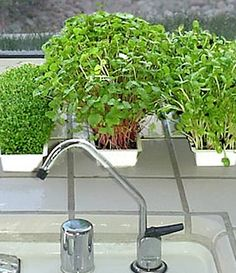 Grow Sprouts for the Perfect Indoor Crop -- Microgreens make list of new gardening trends