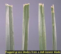 how to get the blade of grass