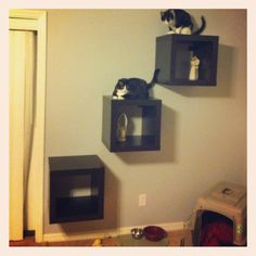 Cat wall from Ikea shelves! Better than a perch.