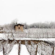 The white land...