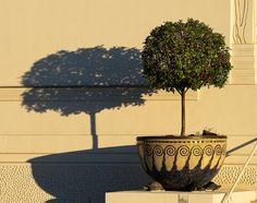 Vienna, Planter Pots, Photos, Morning Light, Art Nouveau, Mosaic, Plants, Plant Pots