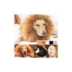 HOOPET Wig Cap Pet Small Dog Cats Funny Lion Hat Collar Puppy Buckle... ($7.50) ❤ liked on Polyvore featuring white