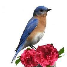 Eastern Bluebird. One of my most favorite birds!