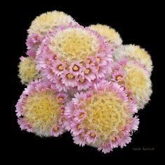 Foro de InfoJardín - Plantas y flores curiosas